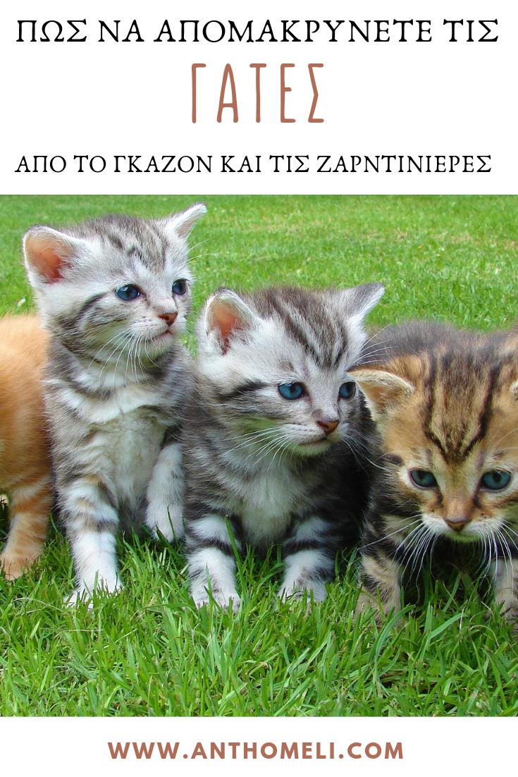 Δύο τρόποι για να απομακρύνετε τις γάτες από το γκαζόν και τις ζαρντινιέρες από το www.anthomeli.com