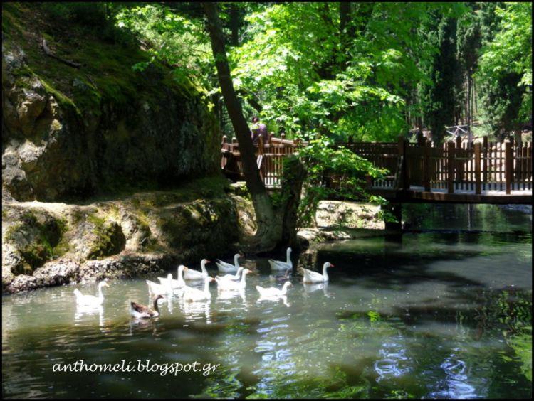 Ημερήσια εκδρομή και βόλτα στα Πλατανάκια (Πανόραμα Θεσσαλονίκης)